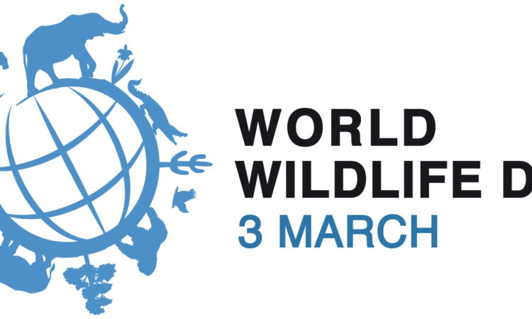 World Wildlife Day: The Future of Wildlife is in Our Hands